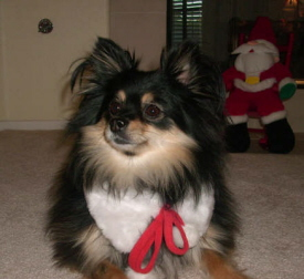 Lindas Molly is among the Best Dog Pictures this Christmas