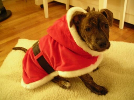 Maria Serrano dog Chico as Santa is Best Holiday Dog Picture Winner 2006